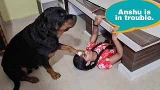 Anshu needs help||my dog playing hide&seek||funny dog video.