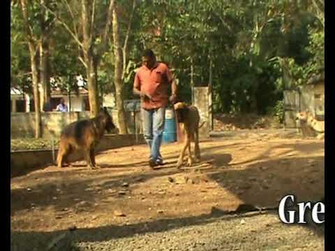 Sreenivas Lingala with Best Dog Breeds.