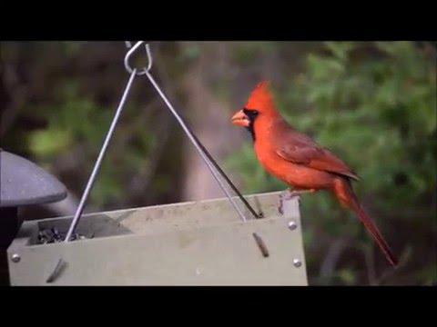 Anahuac NWR Bird Blind