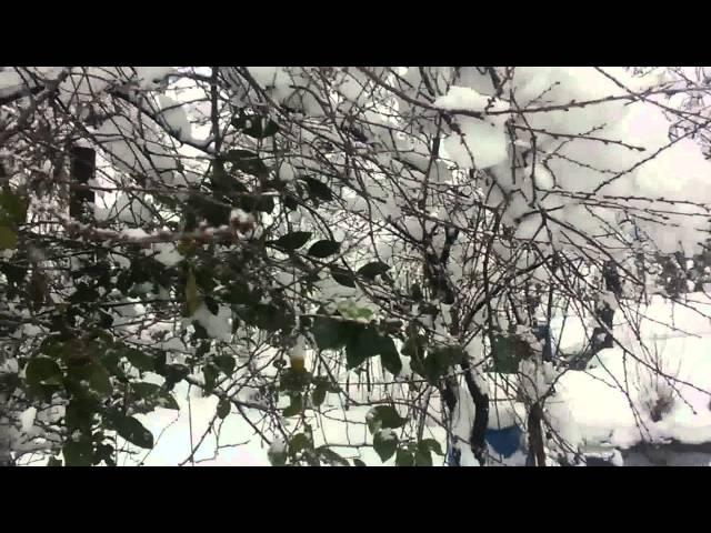 Georgia batumi adjara snow 2.01.2016-?????? ??????? ?????? ???? 2.01.2016