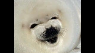 Bouncing Seals 3 [MEME COMPILATION]