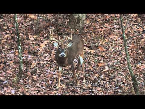 Paul Kitslaar Late October Wisconsin Whitetail Deer Hunt