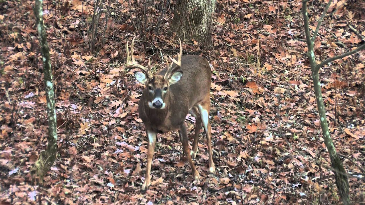 Paul kitslaar late october wisconsin whitetail deer hunt youtube voltagebd Images