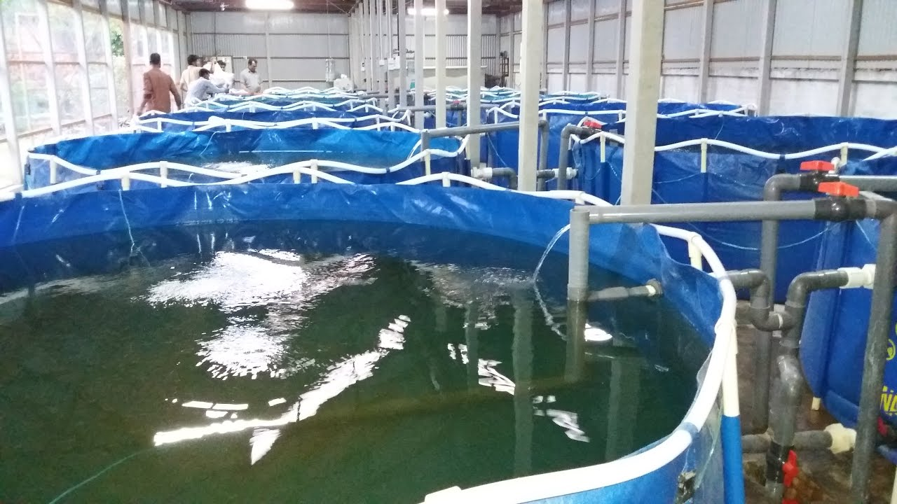 Indoor fish farming ras youtube for Indoor fish farming