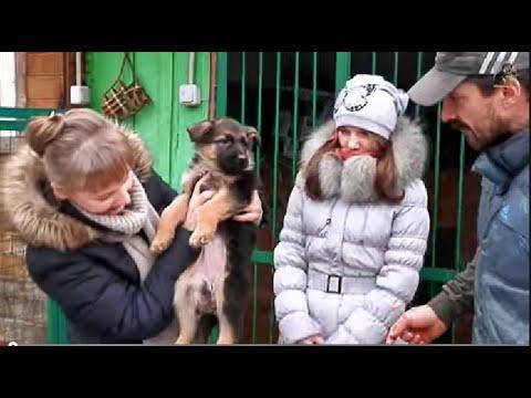 КАК ПРАВИЛЬНО ВЫБРАТЬ ЩЕНКА.How to choose the right puppy.Немецкая овчарка. Odessa.