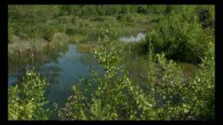 Trailer: Oasen in der intensiven Agrarlandschaft