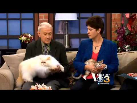 Talk Philly: Cat Fanciers Association