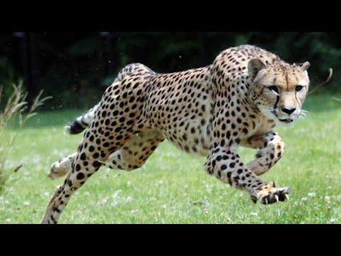 קצת מידע: 10 החיות הכי מהירות שקיימות בעולם!?