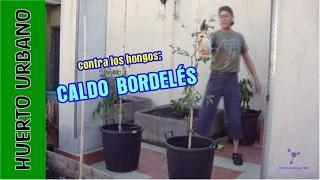 #HuertoUrbano. Protege tus cultivos de los hongos. Fungicida casero: CALDO BORDELÉS