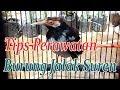 Tips Merawat Jalak Suren Harian Agar Sehat Dan Gacor  Mp3 - Mp4 Download