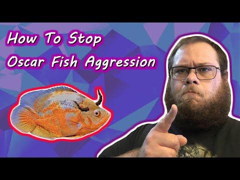 How To Stop Oscar Fish Aggression