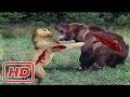 Top 10 Craziest Animal Attacks - Lion, Bear, Buffalo, Giraffe, Snake, Crocodile - 2017
