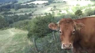 L'homme qui parlait à l'oreille des vaches