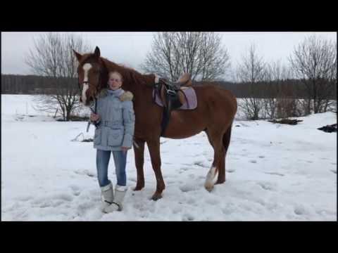 Поздравление для тренера конного спорта 33