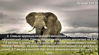 Необъяснимые животные видео.  Топ 10  Самые крупные в мире животные