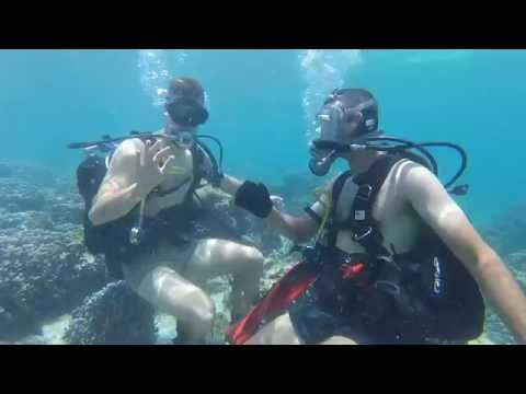 Island Diving in Kuwait, Coral Reef