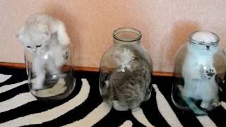 「これどうやって出るのー?」瓶から出るのが下手っぴな子猫