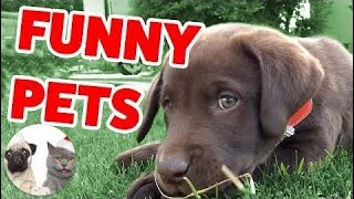 Funny animals | The Funniest Cute Pets & Animals Home Video Bloopers of 2016 Weekly Compilation | F