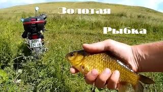 Поймал золотую рыбку.