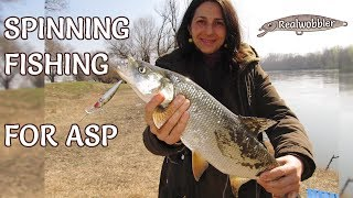 SPINNING Fishing for ASP/ Риболов на РАСПЕР на Спининг/ RAPFEN Angeln mit Wobbler/ Pesca de Aspio