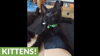 Top reasons to adopt a black cat