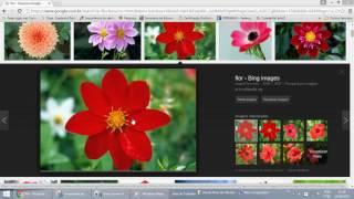 Como copiar imagem da internet sem virus?