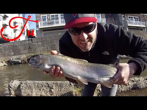 Steelhead Fishing With Spawn Sacs In Port Washington - Sauk Creek
