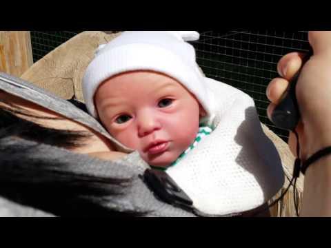 Reborn Babies Go To The Wildlife Zoo & Aquarium!