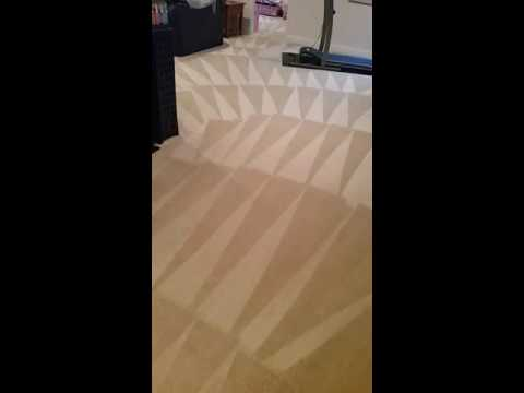 Carpet cleaning service New Castle Delaware video 2017 pet friendly products