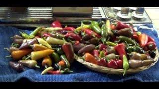 Simple Mixed Hot Pepper Jelly Walkthrough