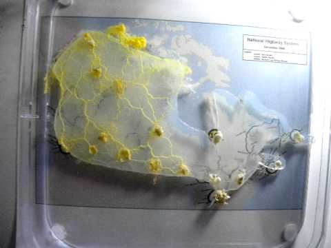 TransCanada Slimeways Slime Mould Imitates The Canadian - Slime mold map of us