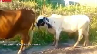 Смешные моменты из жизни животных, смешные забавные видео, веселые моменты