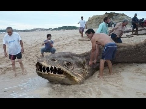 Sea Monsters, The Loch Ness Monster, and Cryptozoology ...