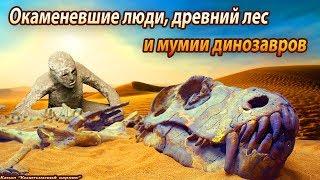 Окаменевшие люди, древний лес и мумии динозавров