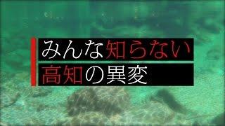 アユの生態・漁獲量への影響~みんな知らない高知の異変~|COOL CHOICE:高知県