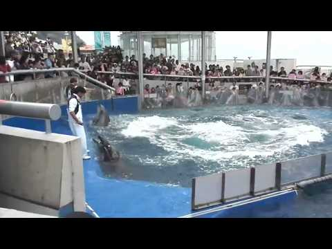 Dolphin Videos For Kids | Dolphin Facts For Kids -  Facts About Dolphin Show To Blow Your Mind