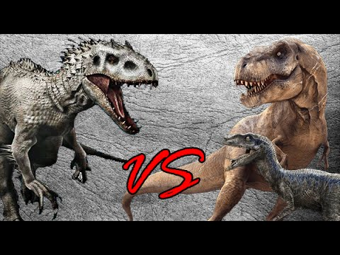 a comparison of the tyrannosaurus rex and the velociraptor Tyrannosaurus rex (osborn 1905) late cretaceous, 65 mya, 123 m in length, was derived from a sister to sinocalliopteryx and was a sister to bird-like dinosaurs in the large reptile tree several varieties are known.