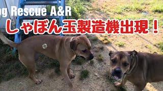 【犬とシャボン玉】シャボン玉製造機出現! thumbnail