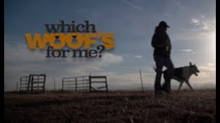 Which Woof's For Me? Sizzle Reel MotionMasters.com