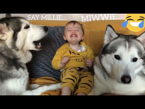 HUSKY HELPS MY BABY TALK!! [TRY NOT TO SMILE]