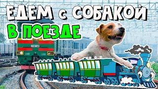 """Как перевезти собаку в поезде: правила и """"сюрпризы"""" в дороге"""