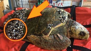 Fisherman Sees Strange Turtle Floating In The Water Gets Closer And Quickly Calls For Help