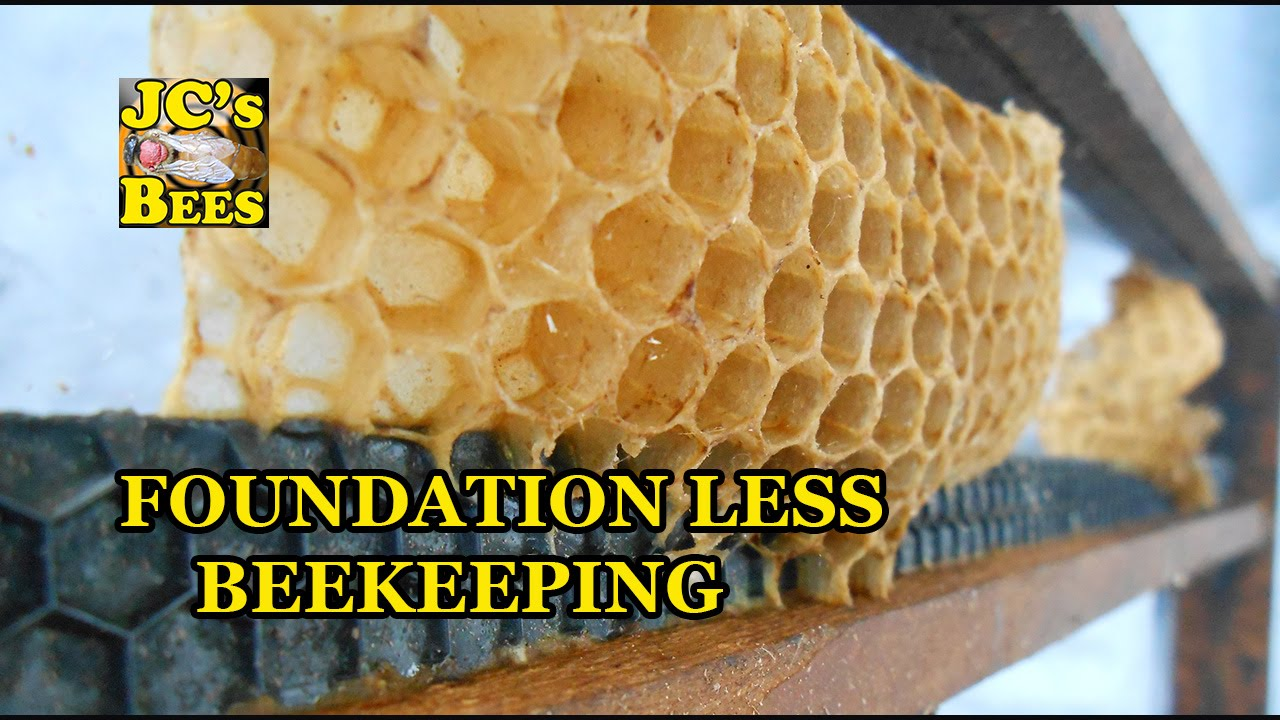 setting up foundation less frames for bee hive youtube