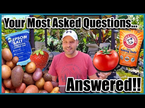 Epsom Salt for Plants and Other Gardening Questions Answered!  Garden Tips and Myths.