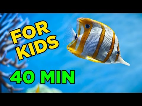 Fun Underwater Adventure for KIDS! (40 Minutes)
