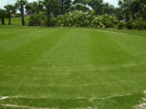 Viera East Golf Club - 6 weeks into grow-in stage