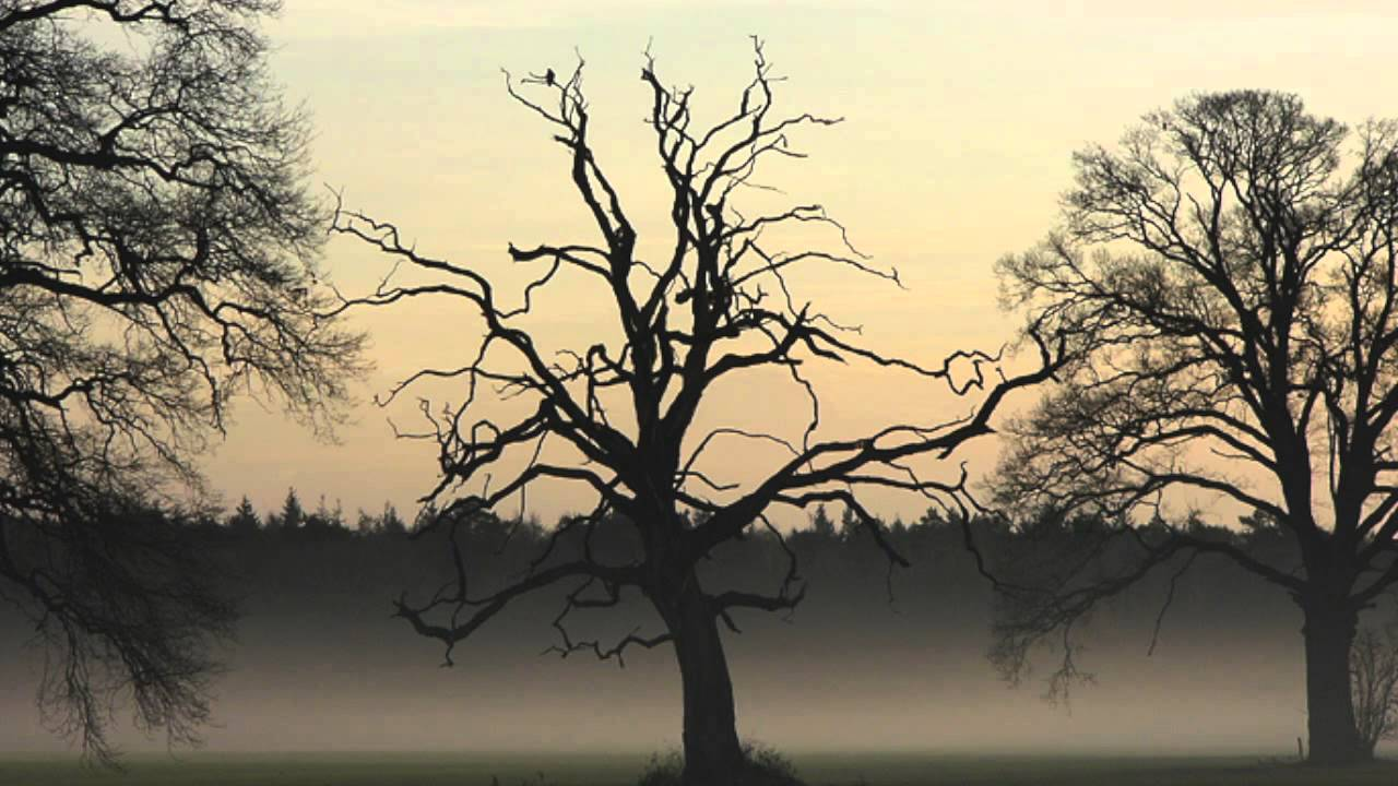 """a poison tree poem commentary Free essay reviews  deconstruction and even a little reader response criticism, on the poem """"how do i love thee"""" written by elizabeth barrett browning."""