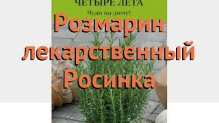 Розмарин лекарственный Росинка (rosinka) ???? Росинка обзор: как сажать, семена розмарина Росинка