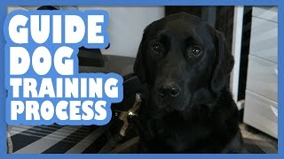 Guide Dog Training Process | Yesterdayswishes