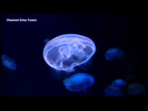 Средиземноморский Аквариум CRETAquarium. Акулы и Медузы.(HD)